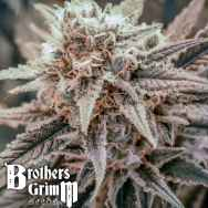 Brothers Grimm Seeds Killer Queen XX