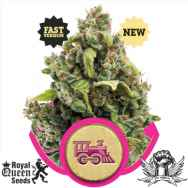 Royal Queen Seeds Candy Kush Express Fast