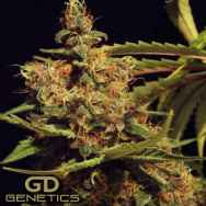 Green Devil Seeds Cheesecake