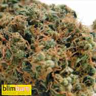 BlimBurn Seeds Chemdog #4