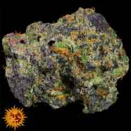 Barneys Farm Seeds Runtz Muffin