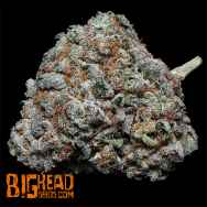 Big Head Seeds Fire OG Kush