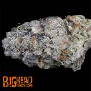 Big Head Seeds Purple Punch