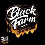 Black Farm Genetix Banana Punch Collection Banana Glukies