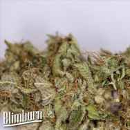 BlimBurn Seeds Blue Dream