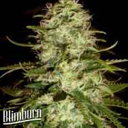 BlimBurn Seeds Cr +