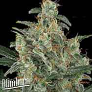 BlimBurn Seeds Kabrales Automatic