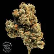 Compound Genetics Seeds Lemon Apricot