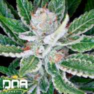 DNA Genetics Seeds Sleestack