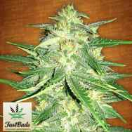 FastBuds Seeds Lemon AK AUTO