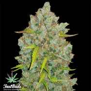 FastBuds Seeds Original Auto BubbleGum