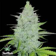 FastBuds Seeds Original Auto Cheese