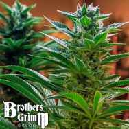 Brothers Grimm Seeds Headband x C99