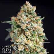 House of the Great Gardener Seeds Sticky Barb