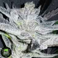 In House Genetics Sherba Frost