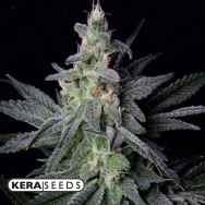 Kera Seeds Gorilla Glue