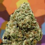 Massive Creations Seeds Lemon Hammer