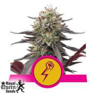 Royal Queen Seeds Green Punch