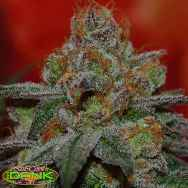SubCools The Dank Seeds Grape Lime Ricky