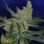 SubCools The Dank Seeds Jack's Cleaner 2
