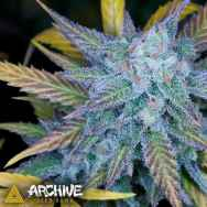 Archive Regular Cannabis Seeds | The Choice Seed Bank