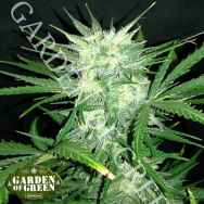 Garden of Green Seeds Cookie Monster AUTO