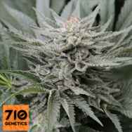 710 Genetics Seeds Coastal OG