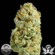 Dinafem Seeds Critical Cheese