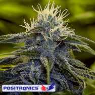 Positronics Seeds Critical #47 Express