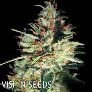 Vision Seeds Gouda's Grass AUTO AKA Delhi Cheese AUTO