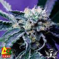 Delta 9 Labs Seeds The Merkabah