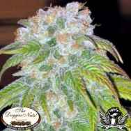 The Doggies Nuts Seeds Big Bud #1