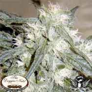 The Doggies Nuts Seeds Northern Lights #1