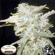The Doggies Nuts Seeds Sweet Tooth #33