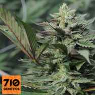 710 Genetics Seeds Dreamcatcher