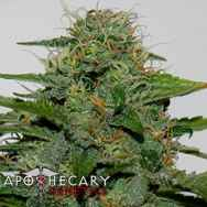 Apothecary Genetics Seeds Earth OG