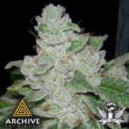 Archive Seeds Face Off OG BX2