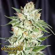 Elemental Seeds Fifth Element