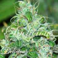 Delicious Seeds Fruity Chronic Juice