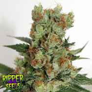 Ripper Seeds Fuel OG