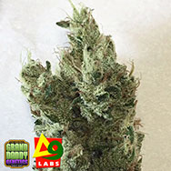 Delta9 Labs x Grand Daddy Genetics Seeds GDP x Neville's Haze