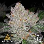 Archive Seeds Grape Smuggler