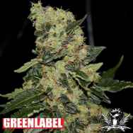 Green Label Seeds Berry Delight