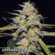 Greenbud Seeds Spitfire