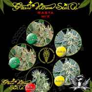 Green House Seeds Rasta Mix