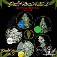 Green House Seeds Sativa Indica Mix B