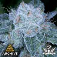 Archive Seeds HashBar OG