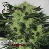 Apothecary Genetics Seeds Headband 707