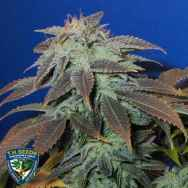 T H Seeds Heavy Duty Fruity