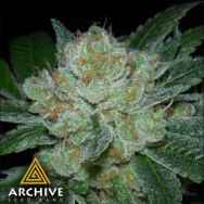 Archive Seeds Hell Raiser OG